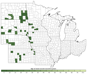Distribution map of Great Plains Toad (Anaxyrus cognatus)