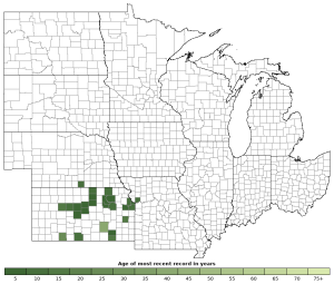 Distribution map of Western Narrow-mouthed Toad (Gastrophryne olivacea)