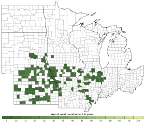 Distribution map of Plains Leopard Frog (Lithobates blairi)