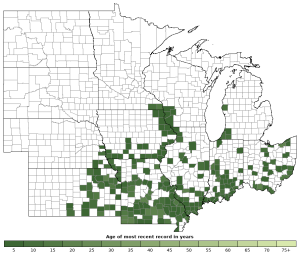 Distribution map of Western Rat Snake (Pantherophis obsoletus)