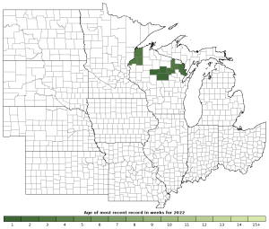 Activity in 2021 of the Mink Frog (Lithobates septentrionalis)
