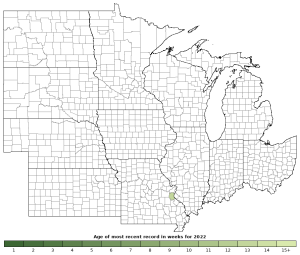 Activity in 2019 of the Great Plains Ratsnake (Pantherophis emoryi)