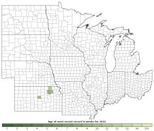 Activity in 2019 of the Great Plains Skink (Plestiodon obsoletus)